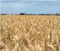 وزير الزراعة: انطلاق موسم حصاد القمح والمحصول يبشر بالخير هذا العام
