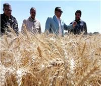 «القصير» يشيد بجهود المزراعين والإدارات المختصة في جودة محصول القمح
