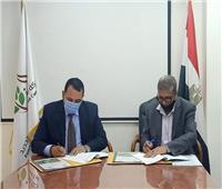 الريف المصري توقع اتفاقا لتوريد 84 ألف شتلة زيتون.. صور