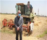 انطلاق الحصاد الآلي لمحصول القمح بمزرعة «الراهب» في جامعة المنوفية