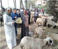 «الزراعة»: صندوق التأمين على الثروة الحيوانية ينشئ 3 قطاعات مركزية