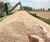 «التموين» تقرر إيقاف استلام القمح اليوم بسبب عيد الأقباط