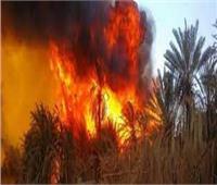 حريق بأحد مزارع الدواجن ونفوق الكثير من الطيور والحيوانات بالدقهلية