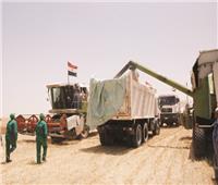 «التموين»: 16 مليار جنيه لصرف مستحقات مزارعى القمح