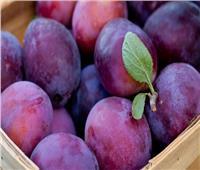 «الزراعة» تصدر روشتة نصائح لمحصول البرقوق والمشمش خلال مايو