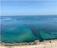 حقيقة تعرض ميناء الإسكندرية للتلوث.. هذا ما فعلته وزارة البيئة