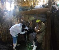 الإنتهاء من تحصين أكثر من 190 ألف رأس ماشية بالمنوفية