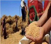 التموين تقرر إيقاف استلام محصول القمح المحلي في هذا الوقت