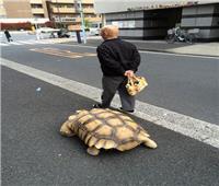 رجل ياباني يتجول بسلحفاة بحرية ضخمة في الأماكن العامة