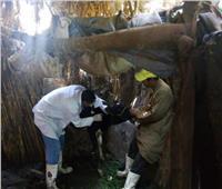 بيطري المنوفية: تحصين192 ألف رأس ماشية ضد مرض الجلد العقدي وجدري الأغنام