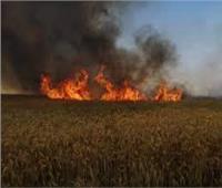 حريق هائل بزراعات القمح بقرية البيهو في المنيا