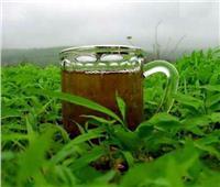 تضرر مناطق زراعة الشاي حول العالم مع تنامي أزمة الاحتباس الحراري