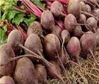 التموين: تيسير استلام محصول بنجر السكر للمزارعين خلال أيام العيد