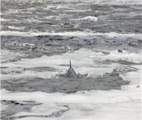 عناق حوتان مهددان بالإنقراض تحت الماء| فيديو