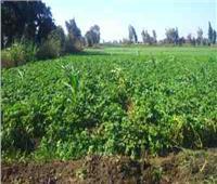 حماية الأراضي: التعدي على الأراضي الزراعية من أنواع الإرهاب | فيديو