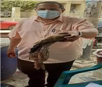 إعدام أسماك فسيخ في حملة وقائية على أسواق العريش