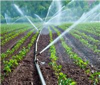 «الزراعة»: الري بالتنقيط يوفر 30% من المياه