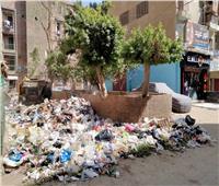 رفع كفاءة النظافة في ثاني أيام العيد بالحوامدية | صور