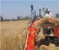 شون وصوامع الشرقية تفتح أبوابها لمزارعي القمح بعد العيد