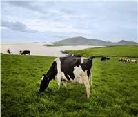 مجلس الغذاء الأيرلندى يطلق مؤتمر مكونات صناعات الألبان و ذلك لتقوية العلاقات مع السوق المصرى