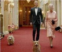موت جديد يفجع ملكة بريطانيا