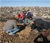 الزراعة: فحص 388 عينة تقاوي وبذور محاصيل واردة من الخارج
