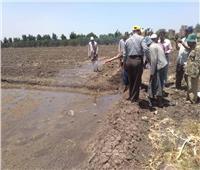 زراعة الأرز ممنوعة في القليوبية.. إزالة مشاتل وإتخاذ الإجراءات القانونية