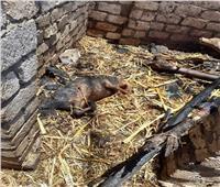 حريق يلتهم 6 أحواش في نجع حمادي ويتسبب في نفوق ماشية
