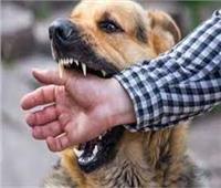 كلب مسعور يعقر 5 أشخاص بقرية الخرطوم بـ«البحيرة»