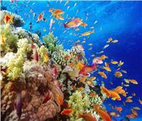 في يوم البيئة العالمي.. «السياحة» وسيلة لاستعادة النظم الإيكولوجية