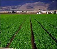 الزراعة: حقن التربة الرملية بالطين تحدٍ جديد لاستصلاح الأراضي الصحراوية