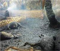 نفوق 35 رأس ماشية في حريق بالوادي الجديد