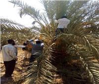 «الزراعة» تنظم عدة مدارس حقلية في 4 محافظات