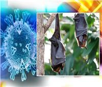 اكتشاف 24 فيروسًا جديدًا في الخفافيش مشابهًا لـ «كورونا»