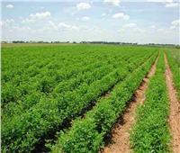 اليوم .. نظر مدى دستورية عقوبة البناء على الأراضي الزراعية