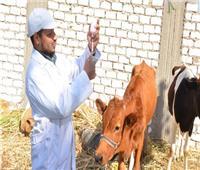 7 سنوات في عهد السيسي .. تحصين 99 مليون رأس ماشية وأغنام