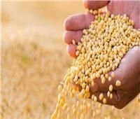 «الزراعة»: فحص 409 عينات تقاوي وبذور محاصيل واردة من الخارج خلال شهر