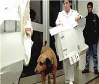 في اليوم العالمي للكلاب..«كانيلو» ينتظر صاحبه 12 عاما أمام المستشفى