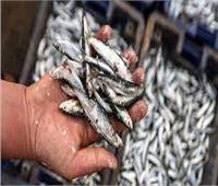 ضبط 3 أطنان أسماك غير صالحة للاستهلاك بالقليوبية