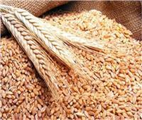 التموين تفتح 450 موقعًا لمواصلة استلام محصول القمح