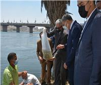 إلقاء 3 ملايين وحدة زريعة البلطي في نهر النيل| صور