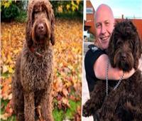 واقعة طريفة| كلب ينقذ امرأة من الإنتحار فى مقاطعة ديفون الإنجليزية