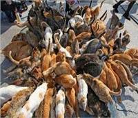 بلاغ في سيدة بحيازة عدد كبير من القطط وإزعاج الجيران بالتجمع الأول