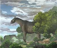العثور على بقايا وحيد القرن العملاق بعد 26.5 مليون سنة  صور