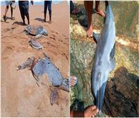 قتل عشرات السلاحف والدلافين بتسمم كيميائي في سنغافورة   صور