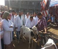 تحصين 344 ألف رأس ماشية ضد مرض الجلد العقدي بالبحيرة