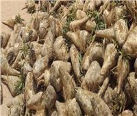 الزراعة تتواصل مع شركات السكر لحل أزمة توريد البنجر بالتنسيق مع التموين