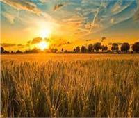 الزراعة: لجان فنية لعلاج مشاكل المزارعين في ٥ محافظات