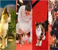 رئيس دار الأوبرا عن قطة المهرجان: مفيش تعليمات بالقتل