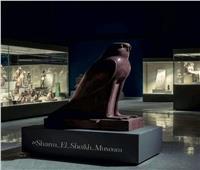 أقدم المعبودات المصرية.. متحف شرم الشيخ يستعرض أحد مقتنياته الصقر المصري